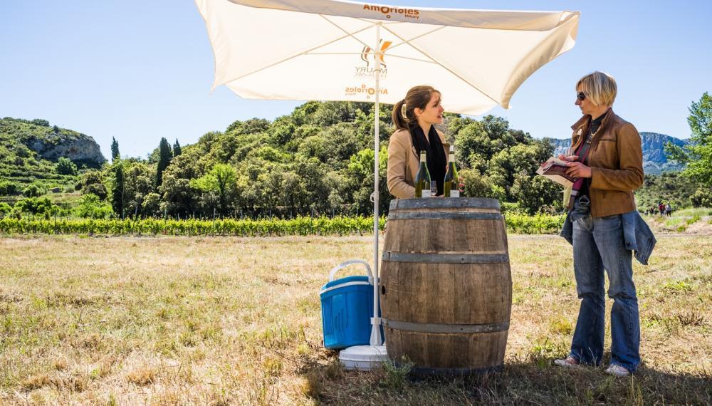 Dégustation de vins en Pyrénées-Orientales